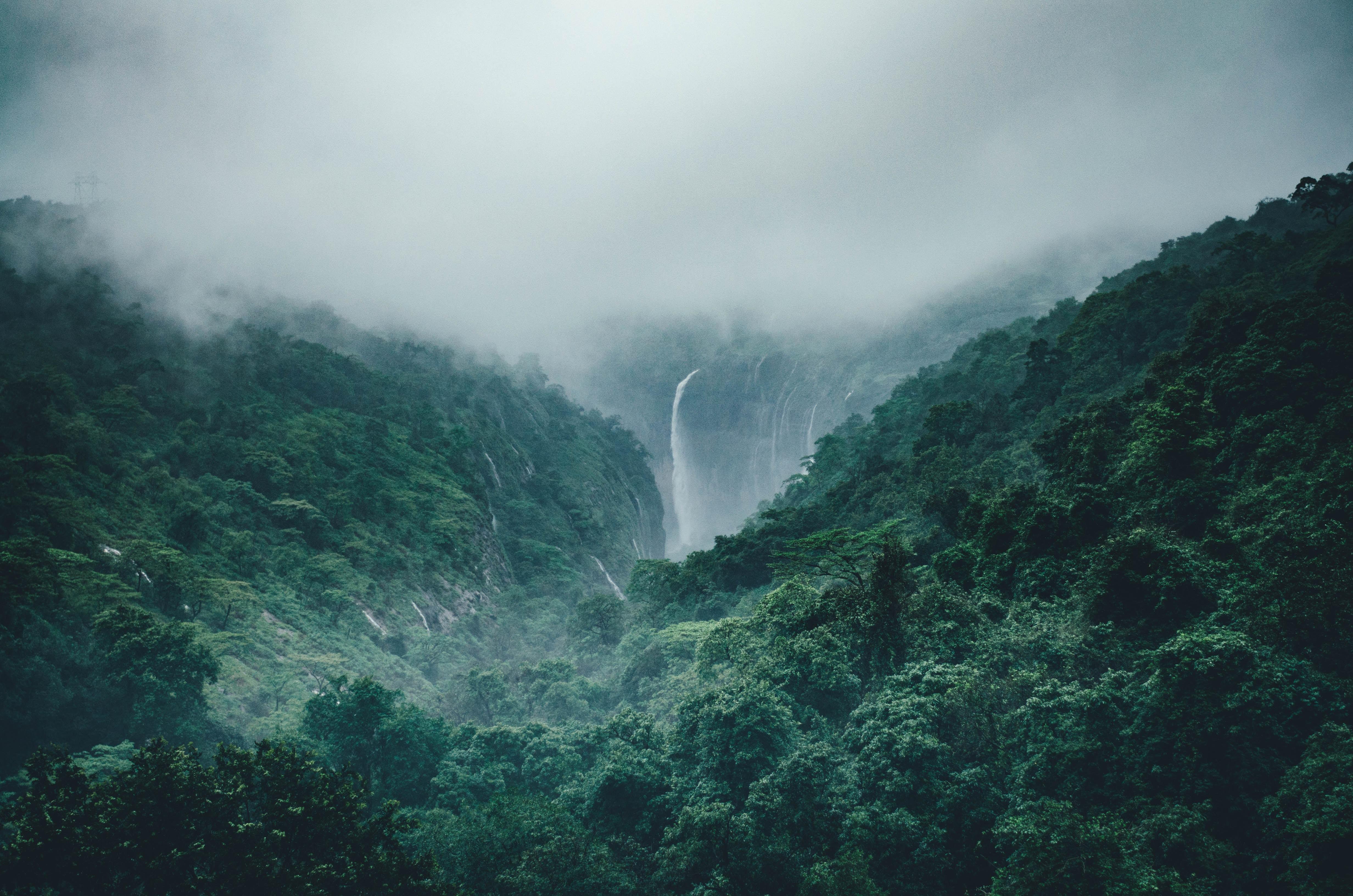 Giv et stykke regnskov og gør en forskel